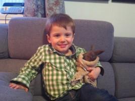 Laurent et lapin